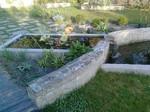 Grands bassins avec nénuphars et carpes Koï, et lamier, paysagiste Mesquer Quimiac