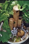 Fontaine en bambou, paysagiste Guérande
